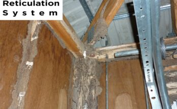 How Much Does Termite Treatment Cost In Melbourne